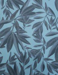 eucalyptus des marais num12